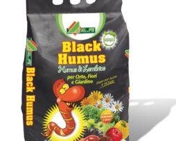 Black Humus