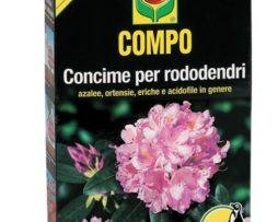 Compo Rododendri