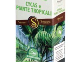 Cycas Piante Tropicali