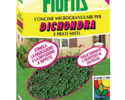 Flortis Dichondra