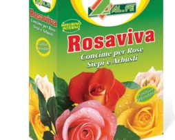 Rosaviva Alfe